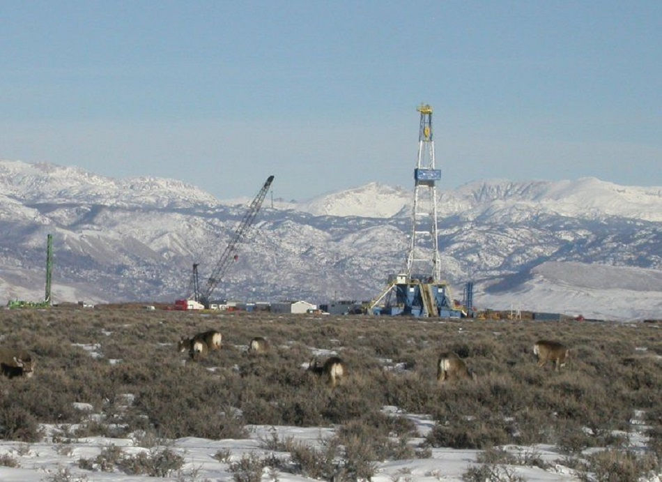 Photo of mule deer with drill rigs in background.
