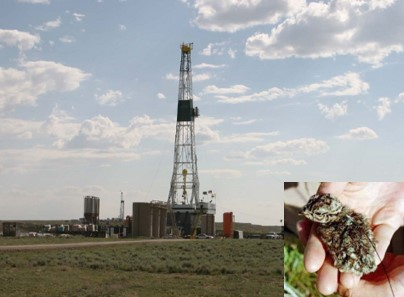 Photo of drilling rig with inset of greater sage grouse chick.