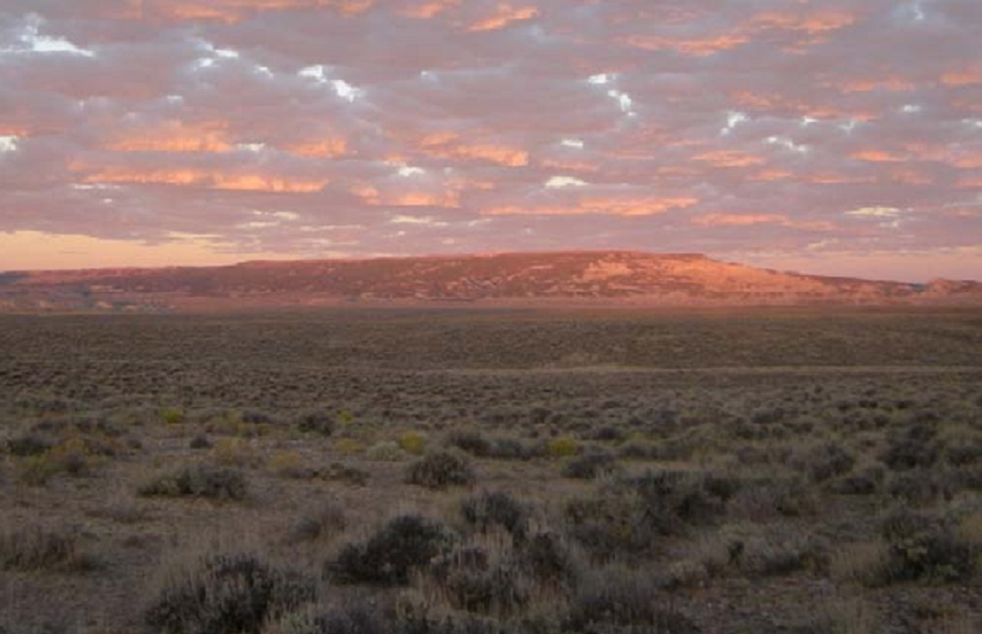 Photo of sagebrush and distant buttes.