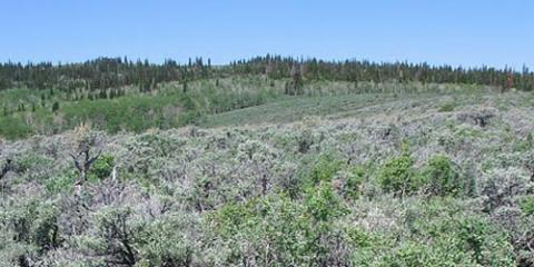 Vegetation sampling in southwest Wyoming